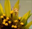 A pretty fly