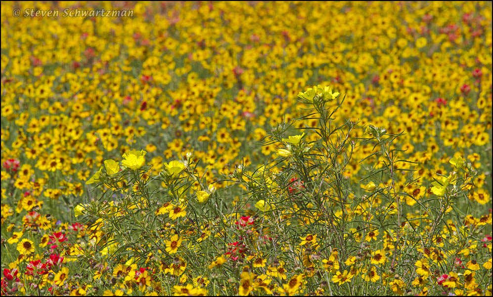 Yellow against yellow portraits of wildflowers click mightylinksfo