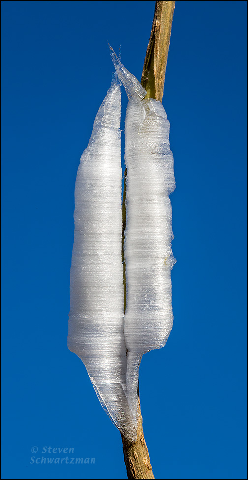 Frostweed Ice 1594
