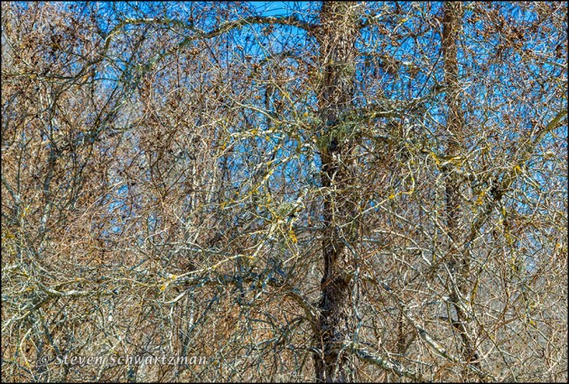 Bare Winter Woods 0593
