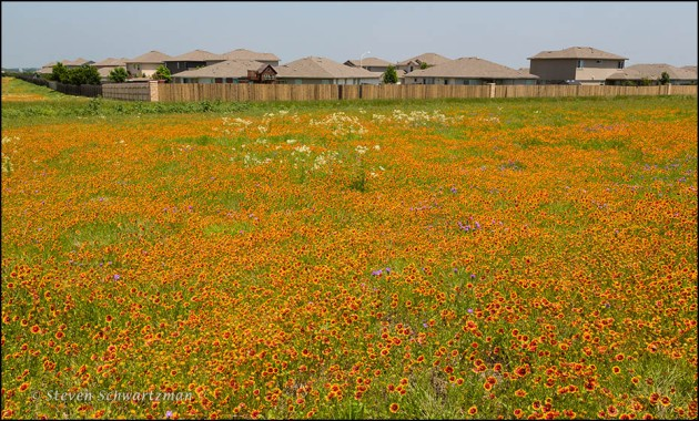 Wildflower Field by Subdivision 7882