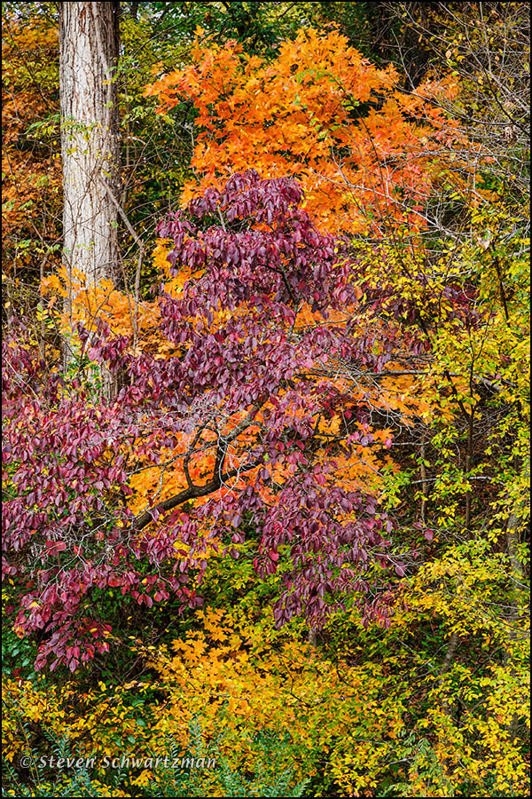 Fall Foliage at Crystal Bridges 8598