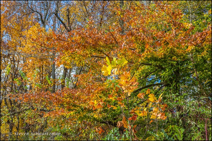 Fall Foliage at Crystal Bridges Museum 8666
