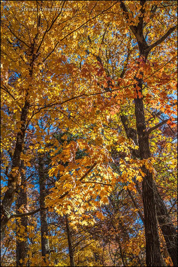 Fall Foliage in Eureka Springs 8225