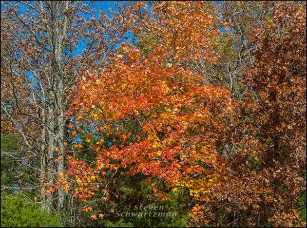 Fall Foliage in Eureka Springs 8374