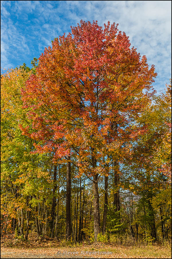 Fall Foliage in Ouachita National Forest 8931