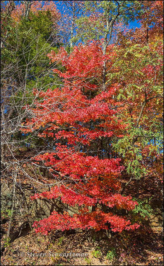 Fall Foliage South of Fayetteville 8735