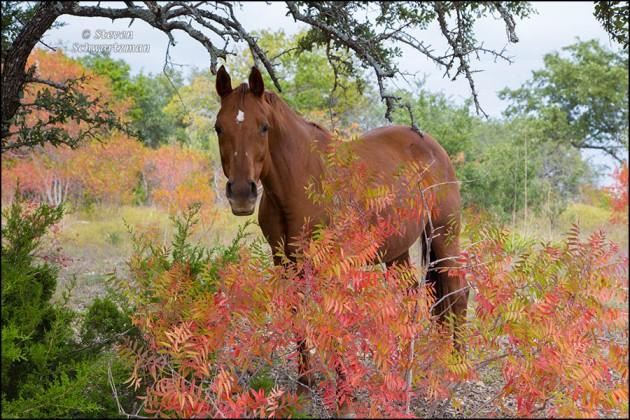 Horse with Flameleaf Sumac 2174