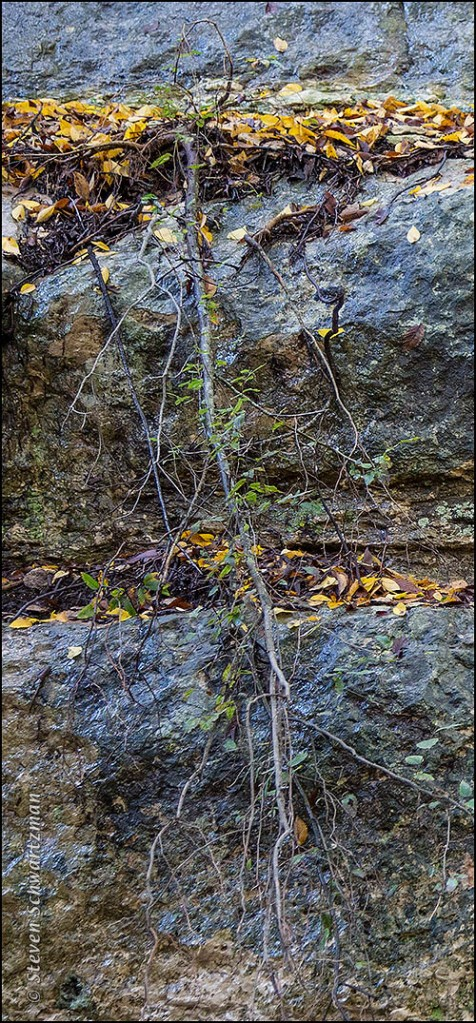 Yellow Leaves Fallen on Limestone Ledges 6329A