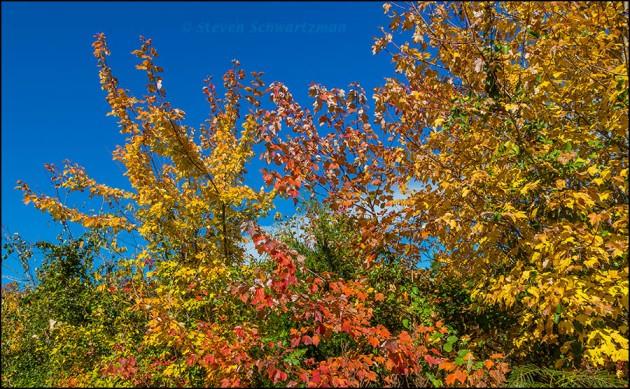 Fall Foliage on Talimena Scenic Drive 8883