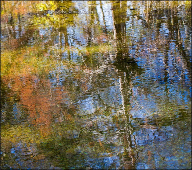 Bald Cypress and Other Trees Reflected in Bull Creek 4661