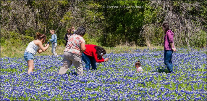 People Photographing Baby in Bluebonnets 5865