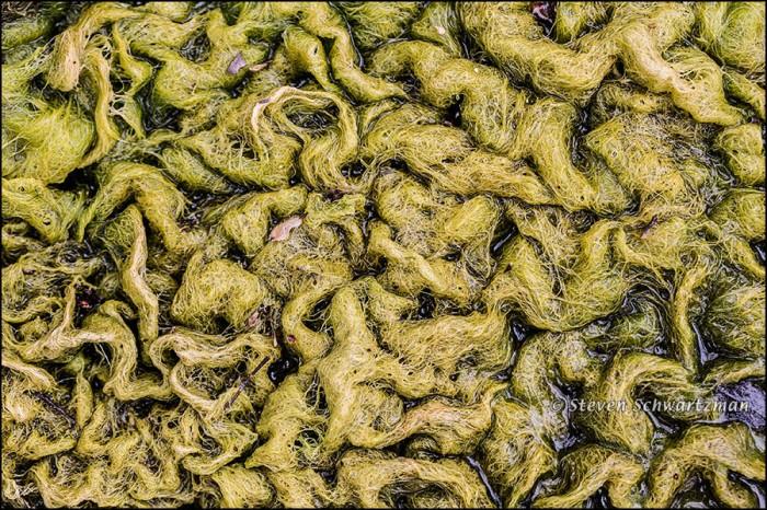 Corrugated Algae 5466