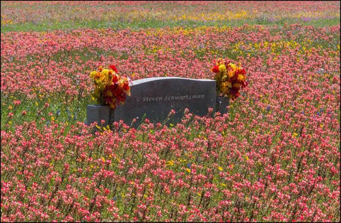 Wildflowers Surrounding Fake Flowers on Tombstone 7803