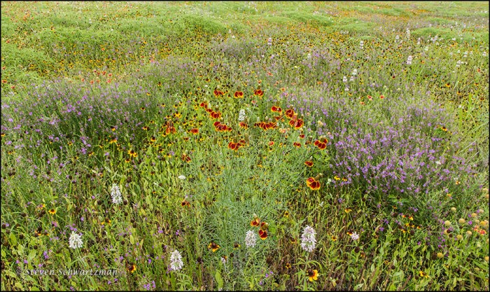 Mixed Prairie Wildflowers 9552