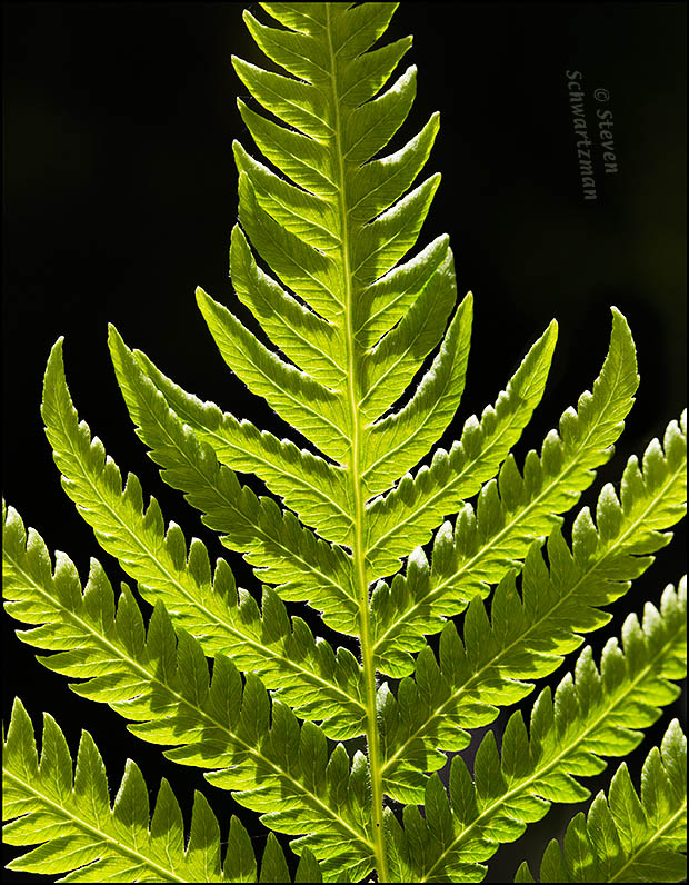Fern Leaf Detail 6471