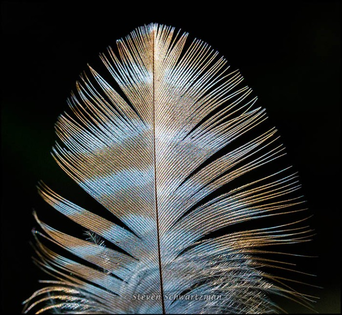 Feather 6722
