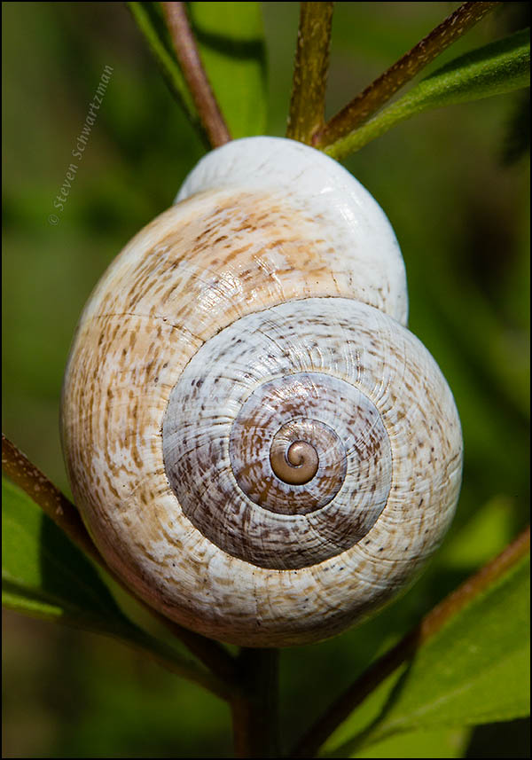 Snail 0497