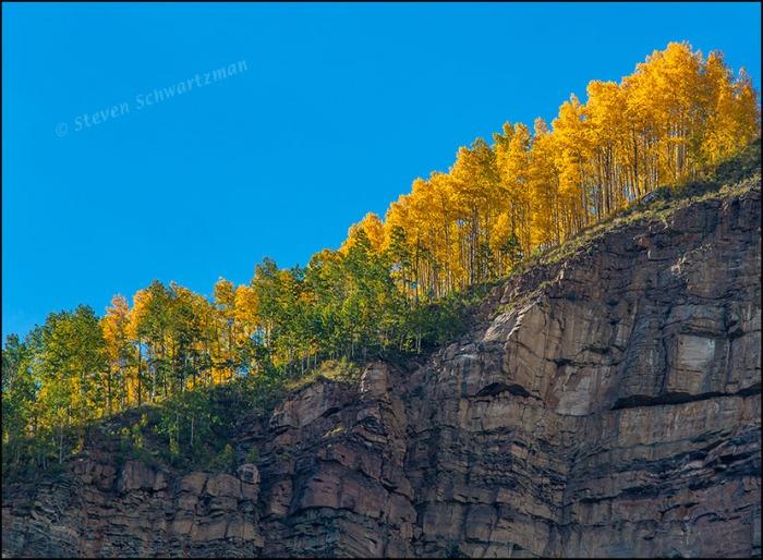 Aspen Trees Turning Yellow on Mountain 0834