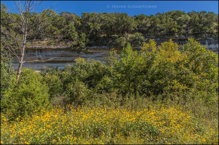 Goldeneye Flowering Near Bull Creek Cliff 7461