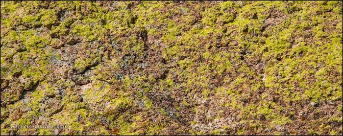 Yellow Lichen Along the Apache Trail 1871