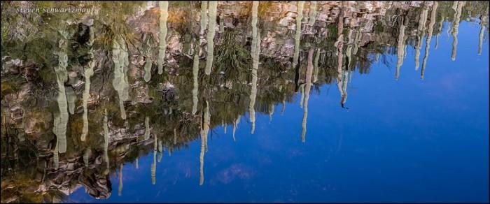 Saguaros Reflected in Creek 2864A