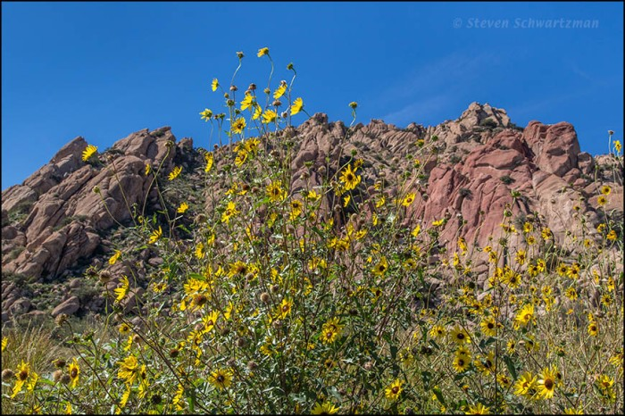 Sunflowers and Boulders 3767