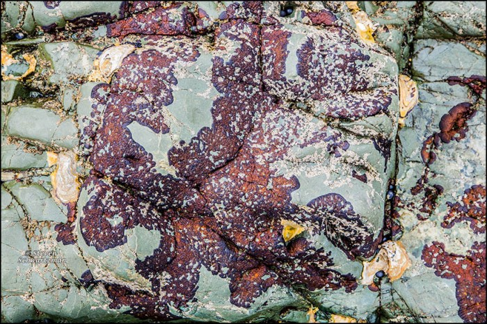 Colorful Coastal Rocks 4273
