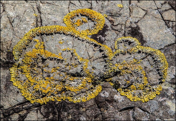 Lichen in Pattern on Rocks 6059A