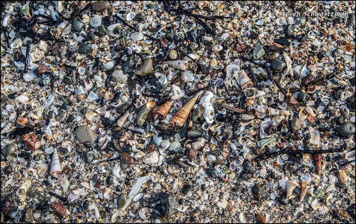 Shell Debris on Beach 8505