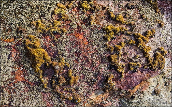 Little Mollusks and Colorful Rocks 8514