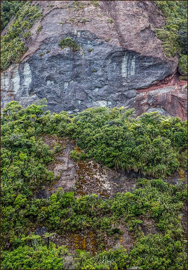 Native Bush on Mountainside 4996