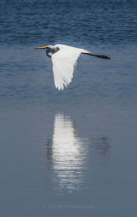 Heron Flying Low Over Lake 1728