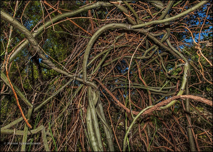 Rattan Vine Tangle Creating a Natural Bower 6816