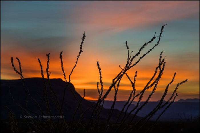 Ocotillo Silhouetted Against Sunset in Big Bend National Park 0190