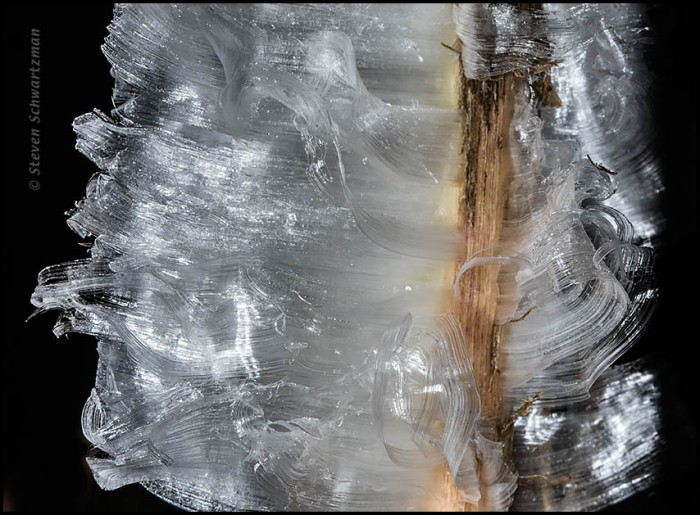 Frostweed Ice Detail 1621A