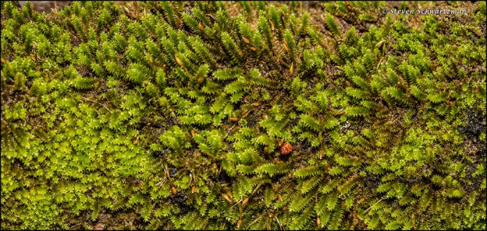 Moss on Tree Branch 5975