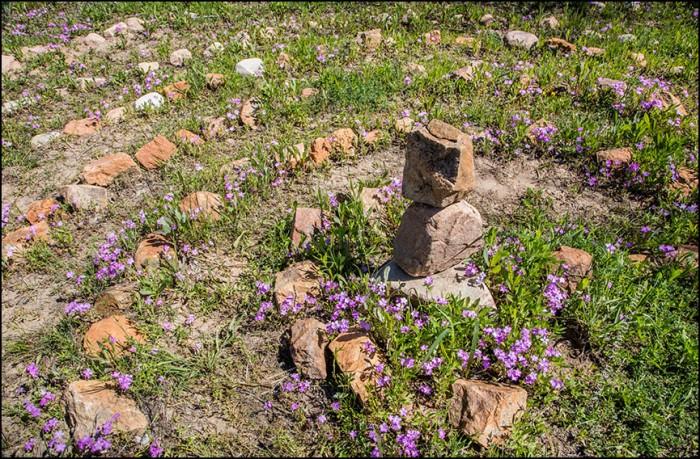 Phlox and Rocks 8977