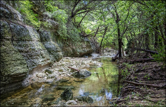Bull Creek Tributary in Great Hills Park South 1776