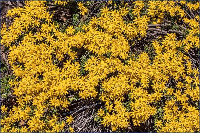 Damianita Flowers 0456