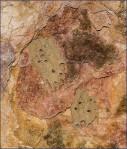 Mud Dauber Tubes 4010