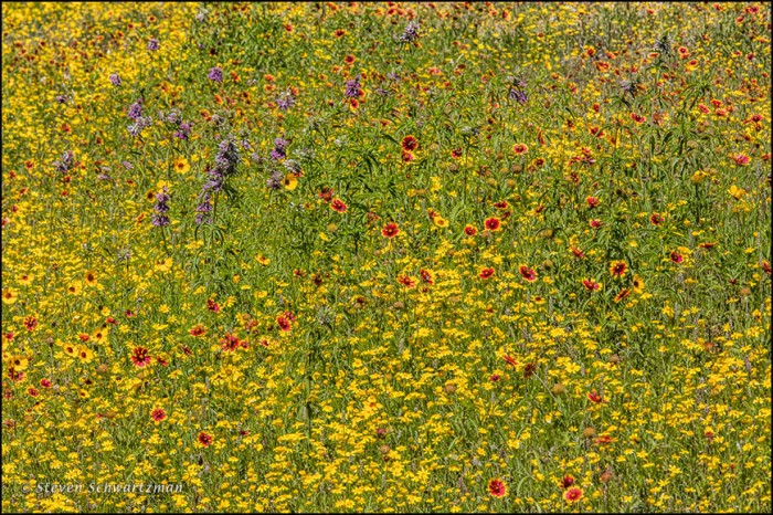 Dense May Wildflowers 3114