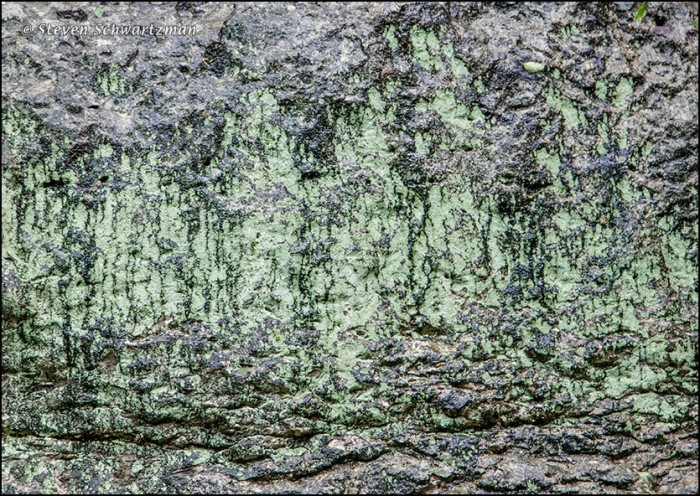 Pale Green Lichen on Cliff 1775A