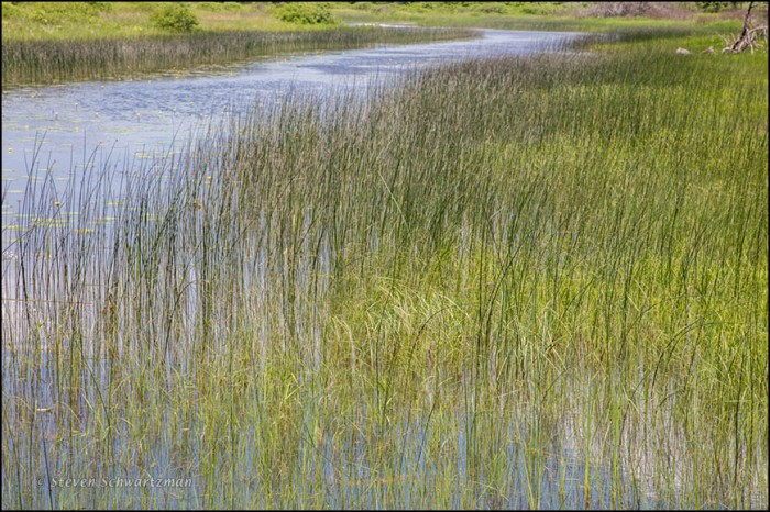 Dead River Scene 6821