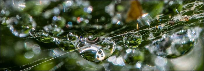 Drops in Spiderweb 8745B