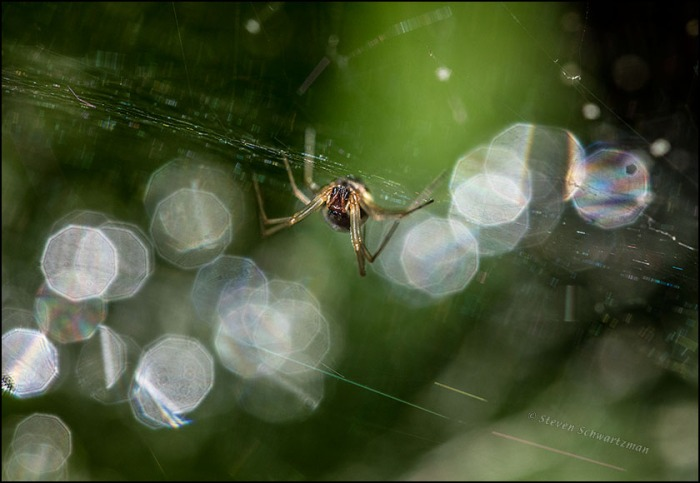 Spider and Nonagons of Light 8737