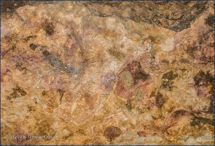 Mud Dauber Tubes, Spiderwebs, Rocks 4010