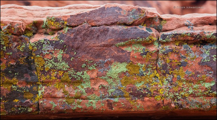 colorful-lichen-on-reddish-rock-5863