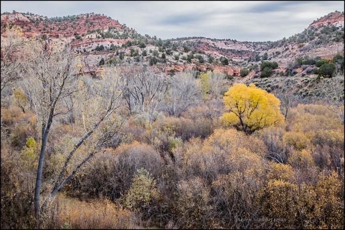 kanab-fall-landscape-4993