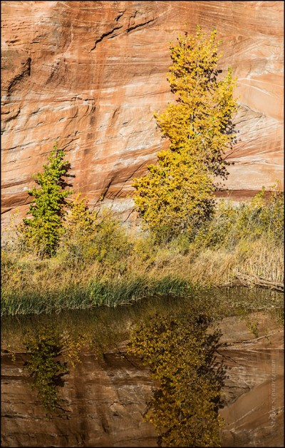 yellowing-tree-by-pond-and-cliff-4257